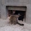 Минстрой поддержал право кошек на зимовку в подвалах